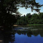 Forêt domaniale de Malmaison