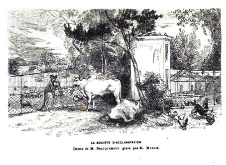 Jardin d'acclimatation – Paris