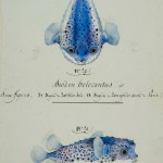 The Art of Science: Baudin's Voyagers 1800-1804