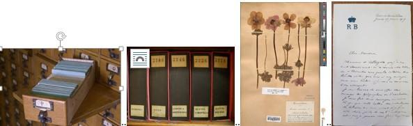 Figure 12 : Tiroir du catalogue de l'herbier de Roland Bonaparte : les 144000 fiches classées par ordre alphabétique de nom de genre indiquent le numéro des classeurs d'herbier. Figure 13 : Classeurs de l'herbier Bonaparte et leur rangement vertical caractéristique, comme les livres d'une bibliothèque. Figure 14 : Planche d'herbier de 1904 issue des cultures du jardin de Saint-Cloud. Figure 15 : Lettre de Roland Bonaparte du 17 janvier 1907 issue de sa correspondance Botanique et proposant des ouvrages en échange de planches d'herbier.