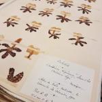 Prince Bonaparte's Herbarium